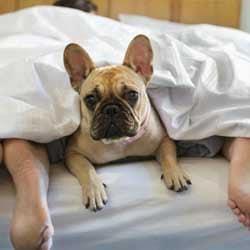 Camping que admite perro