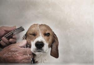 Consejos para bañar a tu perro de un camping que acepta perros en benidorm