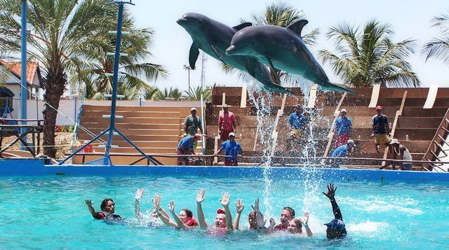 Delfines saltando personas mundomar