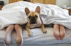 Bungalows para perros en camping que admite mascotas