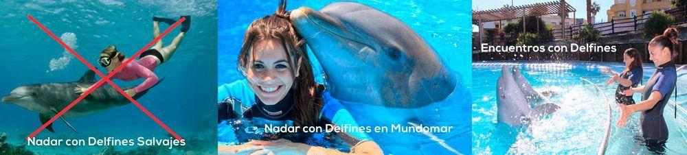 Nadar con delfines en españa