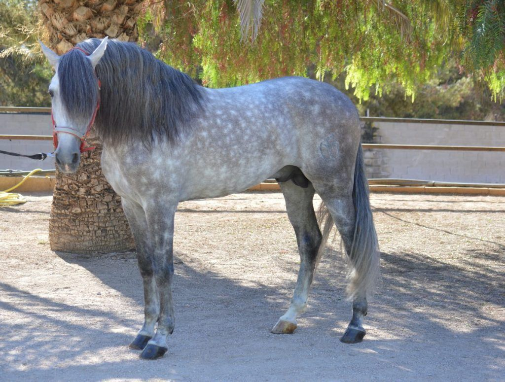 Paseo a caballo en benidorm, por sierra helada