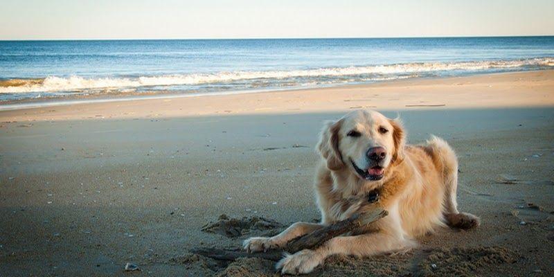 Perro playa alicante