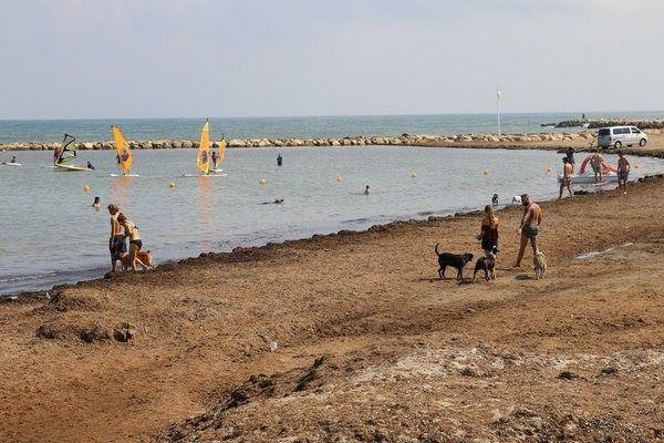 Der strand escollera norte in dénia lässt hunde zu