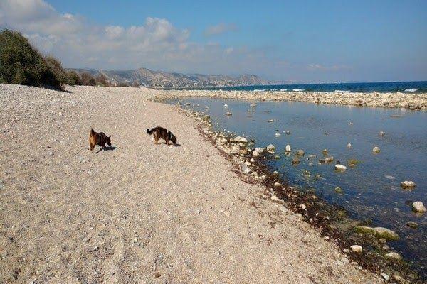 Hundefreundlicher strand in el campello, punta del riu
