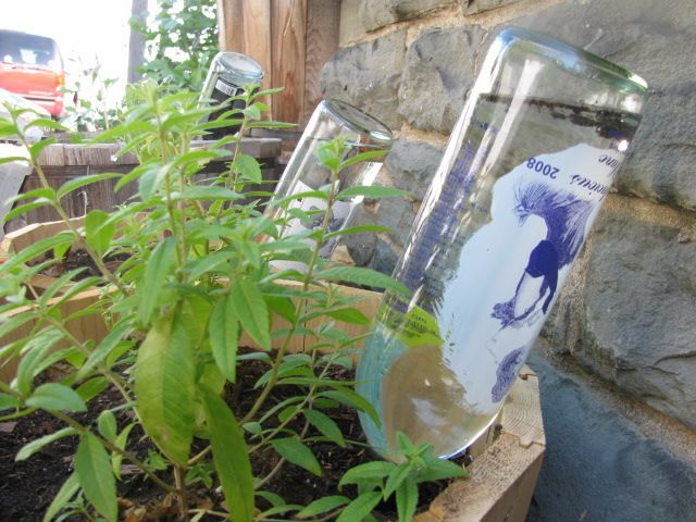 Sistema riego plantas artesanal con botella