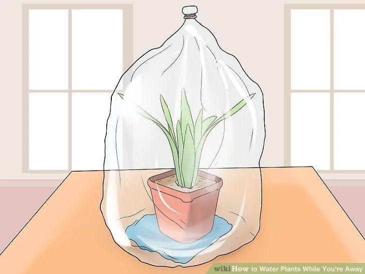 Sistema invernadero casero para regar plantas en vacaciones